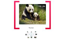 Mini Forum--Giant Panda
