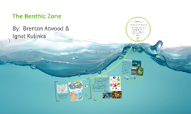 Copy of The Benthic Zone