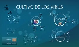 CULTIVO DE LOS VIRUS
