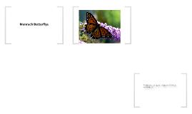 Monarch Butterflys Migration