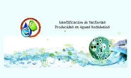 Copy of  IDENTIFICACION DE BACTERIAS EN AGUAS RESIDUALES
