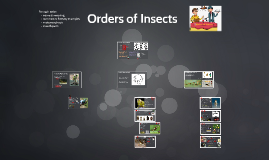 Insect Orders of Interest