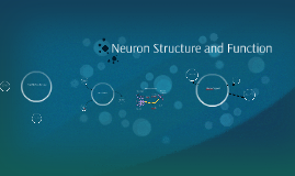 Copy of Neuron Structure and Function