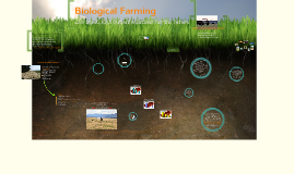 Copy of Soil