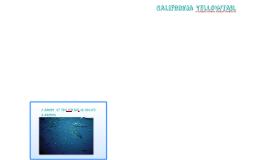 California yellowtail