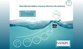 How Marine Debris Impacts Marine Life