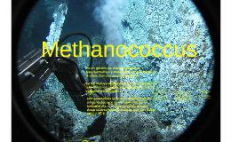 Copy of Methanococcus