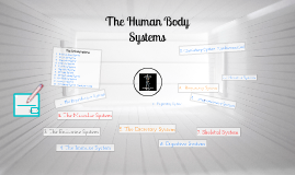 The Human Body Systems http://www.youtube.com/watch?v=yxLO6FIG_8k; http://www.youtube.com/watch?v=wWpTa9v5qYU; http://www.youtube.com/watch?v=NF68qhyfcoM; http://www.youtube.com/watch?v=vFwzECyOVLs
