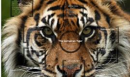 Copy of Sumatran Tiger