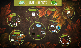 Plants (NS Unit 4)