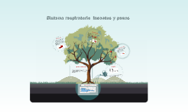 Copy of Sistema respiratorio  insectos