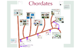 Copy of AP Bio-Biodiversity 4:  The Chordates