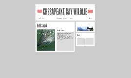 CHESAPEAKE BAY WILDLIE