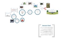 Environmental Studies- CAFOs