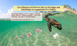 Winter diets of imature Green Turtle (Chelonia mydas)