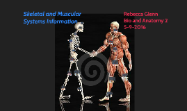 Skeletal and Muscular Systems Information