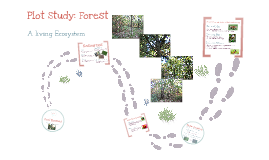 City of ember diagram by sarah bruce on prezi plot study forest ccuart Images