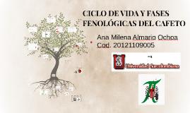 Copy of Copy of CICLO DE VIDA Y FASES FENOLÓGICAS DEL CAFETO
