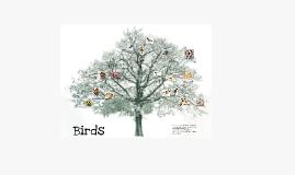 Copy of Birds