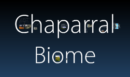 Copy of Chaparral Biome