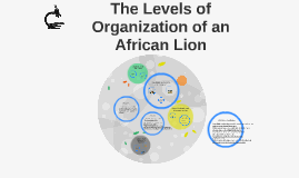 Copy of Copy of The Levels of Organization of an African Lion