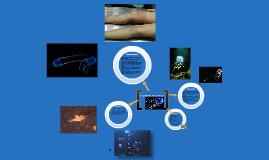 Box Jellyfish: The Ecological Niche