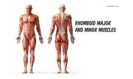 Rhomboid Major