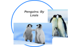 Penguins: By Louis
