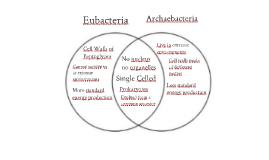 Archaebacteria Vs Eubacteria | www.pixshark.com - Images ...