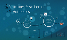 Structures & Actions of Antibodies