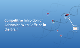 Competitive Inhibition of Adenosine With Caffeine in the Bra