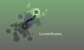 Marihuana y sus efectos