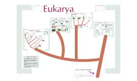 Copy of AP Bio-Biodiversity 3: The Eukarya