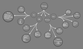 Mapa conceptual de las normas de calidad ( POES, BPM, 3075, HACCP)
