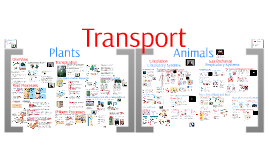 Copy of AP Bio- Regulation 5: Transport & Gas Exchange