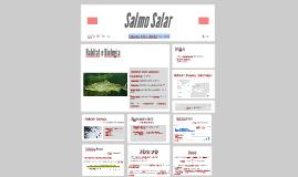 Copy of Salmo Salar