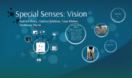 Special Sense: Vision