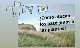 Fitopatología - ¿Cómo atacan los patógenos a las plantas?