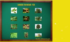 Levelek termések fák 2.b