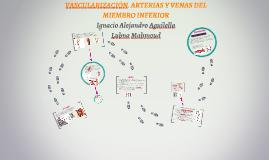 VASCULARIZACIÓN. ARTERIAS Y VENAS DEL MIEMBRO INFERIOR