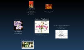 Prezi Flower Project (Creixell/Harvey)