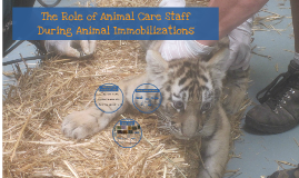The Role of Animal Care Staff during Animal Immobilizations