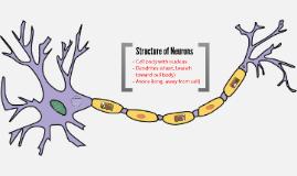 Nervous System (Sensory)