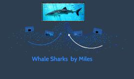 whale sharkes