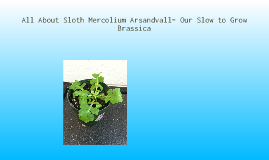 Sloth, Our Little Brassica