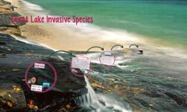 Great Lake Invasive Species
