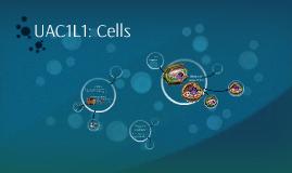 Copy of Quiz UAC1L1: Cells