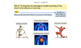 Short Term Effects of Exercise