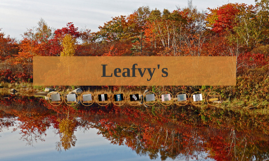 Leafvy's