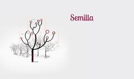 Copy of Semilla